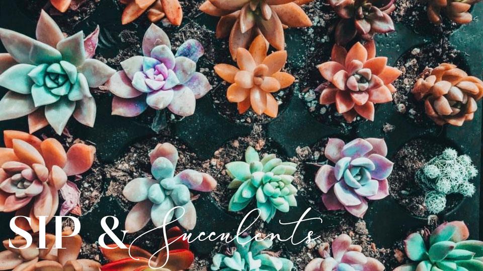 Johnson's Sip & Succulents